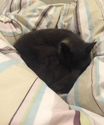 alfie-sleeping