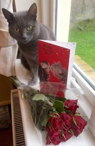alfie-the-doorstep-cat